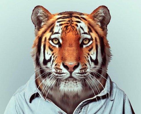 Тварини одягнений-як-Люди-10